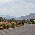 Driving Through Joshua Tree National Park by Ross G Strachan