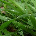 Droplets 01 by Peter Piatt