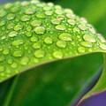 Droplets Of Hope by Nirmal Kumar