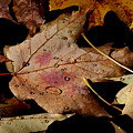 Droplets On Fallen Leaves by Doris Potter