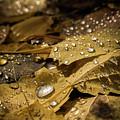 Drops by Jon Reiswig