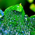 Drops On Leaf by Yuri Hope