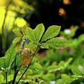 Drops On Plants After Morning Rain by Joe Benning