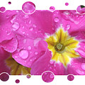Bubbly Pink Raindrops  by Carol Groenen