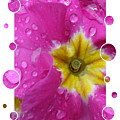 Drops Upon Raindrops 5 by Carol Groenen