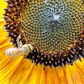 Drunken Bee by Trish Hale