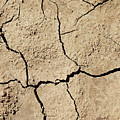 Dry Cracked Earth And Green Leaf by Piotr Marcinski