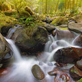 Dry Creek II by David Gn