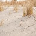 Dry Dune Grass Plants by Arletta Cwalina