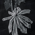 Dry Leaf Collection Bnw 2 by Totto Ponce