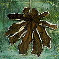 Dry Leaf Collection Wall by Totto Ponce
