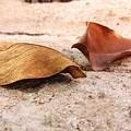 Dry Leaves by Gnaneshwar Gurram