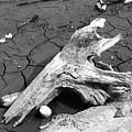 Dry Wood On Barren Land by Vineta Marinovic