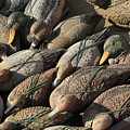 Duck Decoys On Burano by Michael Henderson