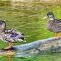 Duck Duck by Erich Grant