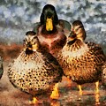 Duck - Id 16235-220308-3425 by S Lurk