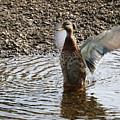 Duck In A Flap by Michaela Perryman