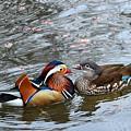 Duck Love by Taras Bekhta