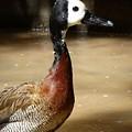 Duck by Manuel Sanchez