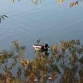 Duck On Golden Pond by Carol Groenen