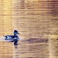 Duck Pond 3 by Buddy Scott