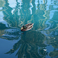Duck Swimming In The Blue Lagoon by Aimee L Maher ALM GALLERY