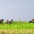 Duck Walk by T Guy Spencer
