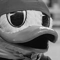 Ducking Around by Laddie Halupa