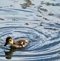 Duckling by Kathryn Wilde
