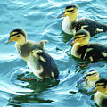 Ducklings Digital Water Color by As the Dinosaur Flies Photography