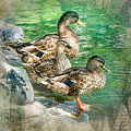 Ducks-a by Larry White