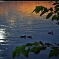 Ducks At Daybreak  by Buck Buchanan