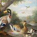 Ducks In A River Landscape by Jakob Bogdany