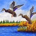 Ducks Landing In A Marsh by William Tremble