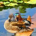 Ducks by Noah Cole