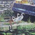 Ducks On Dockside by Martin Davey