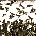 Ducks On The Move by Tracy Winter