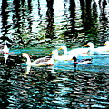 Ducks by RJ Walker