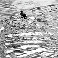 Ducks Swirl by Vm Vassolo