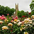 Duke Chapel And Roses by Jill Lang
