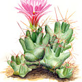 Dumpling Cactus by Sue Sill