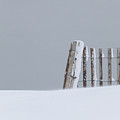 Dune Fence In A Snow Storm by Susan Ballard