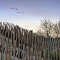 Dune Fences by Brian Wallace