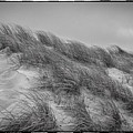 Dune Grass, Florence by Michael Ziegler