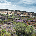 Dune Plants As Erica And Beautiful Sky by Compuinfoto