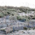 Dune Walk by Karin Everhart