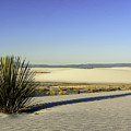 Dunes And Yucca One by Paul Basile