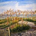 Dunes At Dawn by Shirley Braithwaite Hunt
