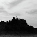 Dunes by Elizabeth Green