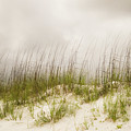 Dunes by Michelle Rollins